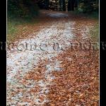 Camino en Irati