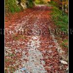 Irati - Camino